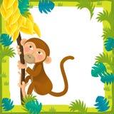 Cartoon frame - wildlife - monkey Stock Images