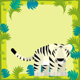 Cartoon frame - wildlife - tiger Stock Photography