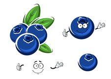 Cartoon fresh blueberry fruits on white Stock Images