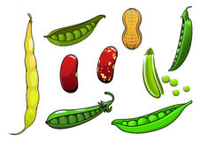 Cartoon fresh legumes and vegetables Stock Photos