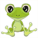 Cartoon Frog. Cute Frog isolated on a white background Royalty Free Stock Photography