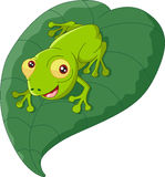Cartoon frog sitting on a leaf Royalty Free Stock Photo