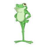Cartoon Frog. Vector image of an green Cartoon Frog Stock Image