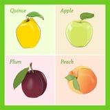 Cartoon fruits. Set of four cartoon fruits royalty free illustration