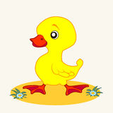 Cartoon. Fun zoo. Cartoon vector Illustration of cute duckling Royalty Free Stock Image
