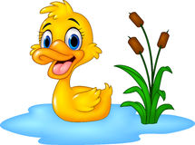 Cartoon Funny Baby Duck Floats On Water Royalty Free Stock Photos