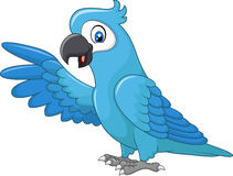 Cartoon funny blue macaw presenting isolated on white background Royalty Free Stock Photos