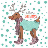Cartoon funny Christmas deer knitted clothes and socks, Royalty Free Stock Image