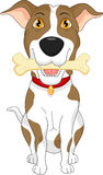 Cartoon funny dog with bone  on white background Stock Images