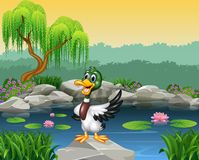 Cartoon funny duck presenting Royalty Free Stock Images