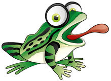 Cartoon funny frog. Royalty Free Stock Image