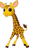 Cartoon funny giraffe mascot  on white background Stock Photography