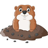 Cartoon funny groundhog Stock Photo