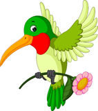 Cartoon funny hummingbird Royalty Free Stock Images