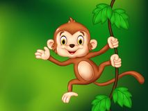 Cartoon funny monkey hanging and waving hand Stock Images