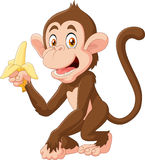 Cartoon funny monkey holding banana isolated on white background Royalty Free Stock Photos
