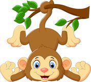 Cartoon funny monkey on a tree Stock Images