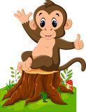 Cartoon funny monkey Stock Images