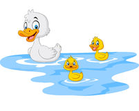 Cartoon funny mother duck with baby duck floats on water Stock Photos