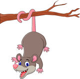 Cartoon funny Opossum on a Tree Branch Royalty Free Stock Images