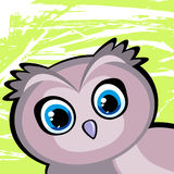 Cartoon funny owl Royalty Free Stock Image