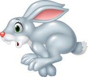 Cartoon funny panic bunny running isolated on white background Stock Image