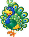 Cartoon funny peacock  on white background Stock Photography