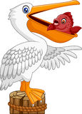 Cartoon funny Pelican in the bay with fish in mouth Stock Photography
