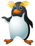 Cartoon funny penguin rockhopper Stock Images