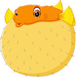 Cartoon funny puffer fish Stock Photography