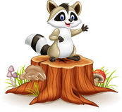 Cartoon funny raccoon cartoon waving hand on tree stump Royalty Free Stock Images