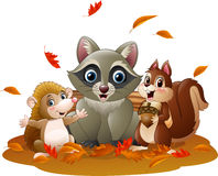 Cartoon funny raccoon, hedgehog and squirrel in the autumn weather Stock Photos