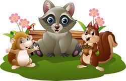 Cartoon funny raccoon, hedgehog and squirrel Stock Image