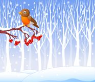 Cartoon funny robin bird on the berry tree with winter background Stock Image