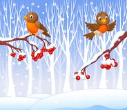 Cartoon funny robin bird on the berry tree with winter background Royalty Free Stock Image