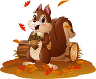 Cartoon funny squirrel holding pine cone in the autumn weather Stock Photos