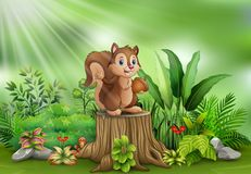 Cartoon funny squirrel holding pine cone and standing on tree stump stock illustration