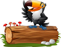Cartoon funny toucan vector illustration