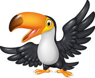 Cartoon funny toucan  on white background Royalty Free Stock Photo