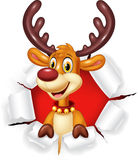 Cartoon funy deer with blank sign Isolated on white background Royalty Free Stock Image