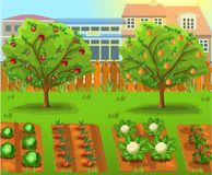 Cartoon garden with vegetables and fruit trees. Cartoon garden with vegetables like cabbage, carrots, cauliflower and pepper and fruit trees Stock Photography
