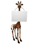 Cartoon giraffe holding blank sign. A cute, goofy cartoon giraffe holding a blank sign in its mouth, white background Royalty Free Stock Images