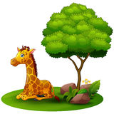 Cartoon giraffe sitting under a tree on a white background Stock Photography