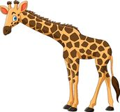 Cartoon giraffe on white background. Illustration of Cartoon giraffe on white background Stock Illustration