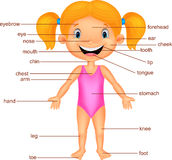 Cartoon Girl Vocabulary part of body Royalty Free Stock Photography