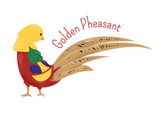 Cartoon golden or Chinese pheasant isolated on white Stock Image