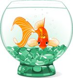 Cartoon Goldfish queen in the aquarium stock illustration