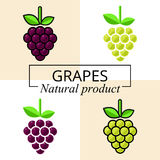 Cartoon grapes green and purple set with text. Vector image of a cartoon grapes green and purple set with text Stock Photos