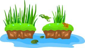 Cartoon grass and canes on a bump in the swamp. Frogs on the lilies Royalty Free Stock Photo