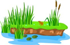 Cartoon grass and canes on a bump in the swamp. Frogs on the lilies Vector Illustration